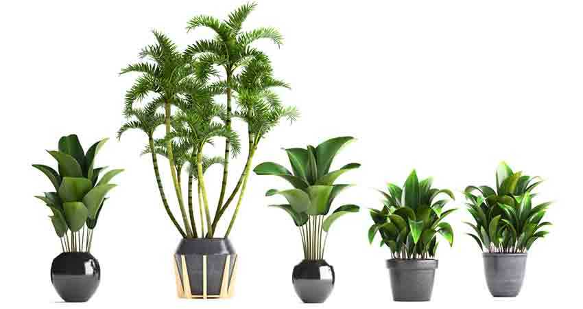Indoor Pots for Plants